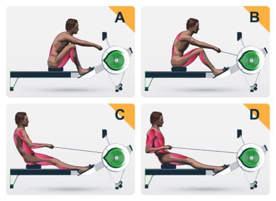 Hvilke muskler træner en romaskine